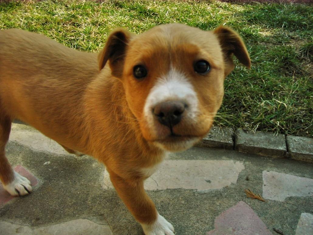 cute pic - little dog